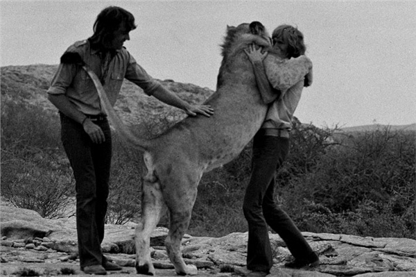 Christian the Lion reunion
