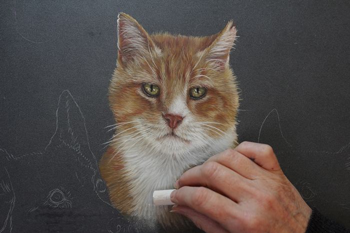 Painting in progress of ginger cat by NZ pet portrait artist
