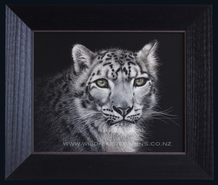 snow leopard scratchboard art framed
