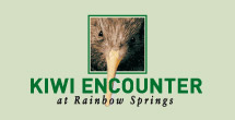 Kiwi Conservation at Kiwi Encounter, Rainbow Springs, New Zealand