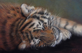 Tiger painting by Karen Neal was judged into the BBC Wildlife Artist of the Year finals